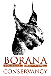 Borana Conservancy